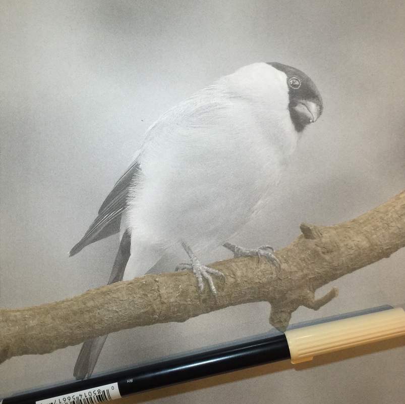 WIP Bird from the Beautiful Creatures grayscale coloring book