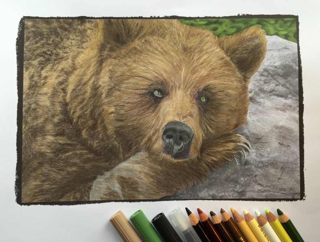 Bear from Beautiful Creatures grayscale coloring book. Colored with Tombows and colored pencils.