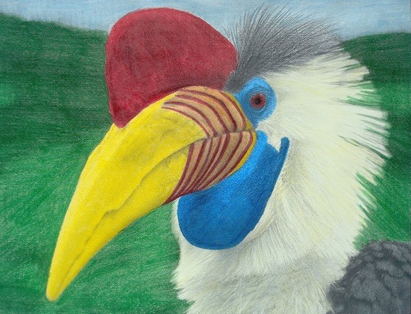 Hornbill from the Beautiful Creatures grayscale coloring book. Colored by Lucy Fyles.