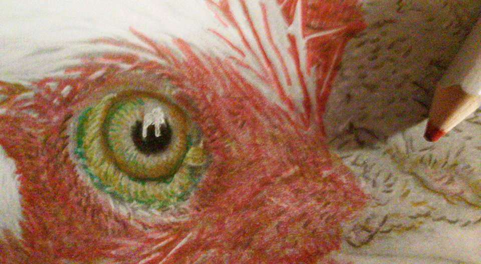 Close-up of the Rooster's eye being colored by Lizz Chavanne. From the Beautiful Creatures grayscale coloring book.