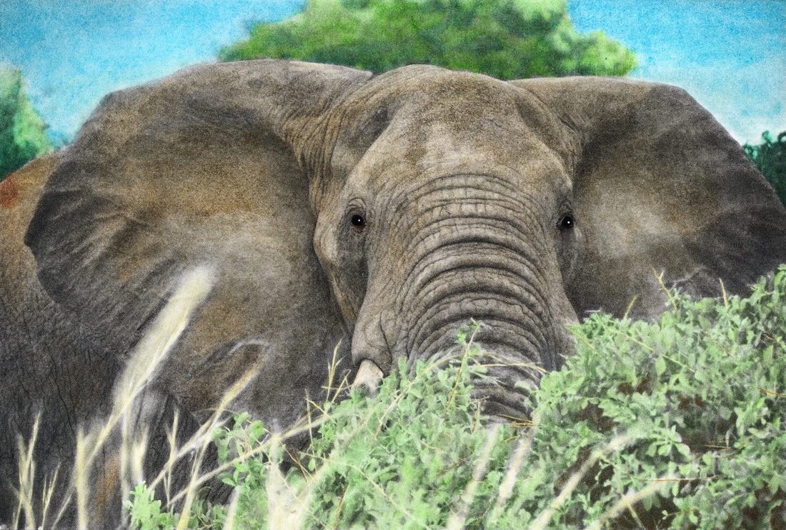Elephant from the Beautiful Creatures grayscale coloring book. Colored by Christy Hammer.