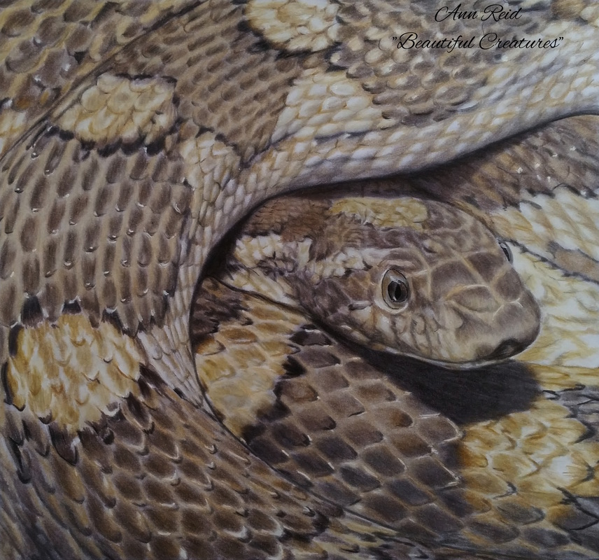 Beautiful Creatures Grayscale Adult Coloring Book: Snake coloring ...