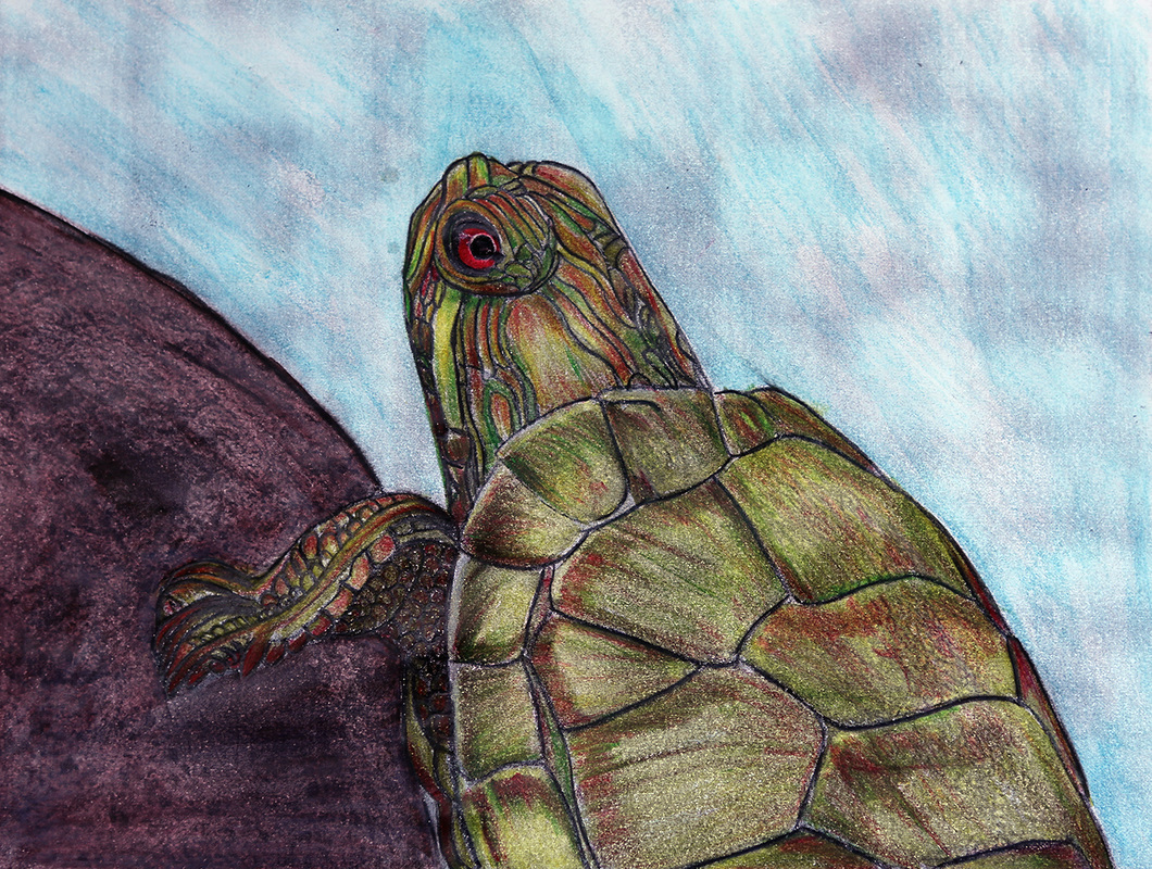 beautiful creatures grayscale coloring book turtle coloring