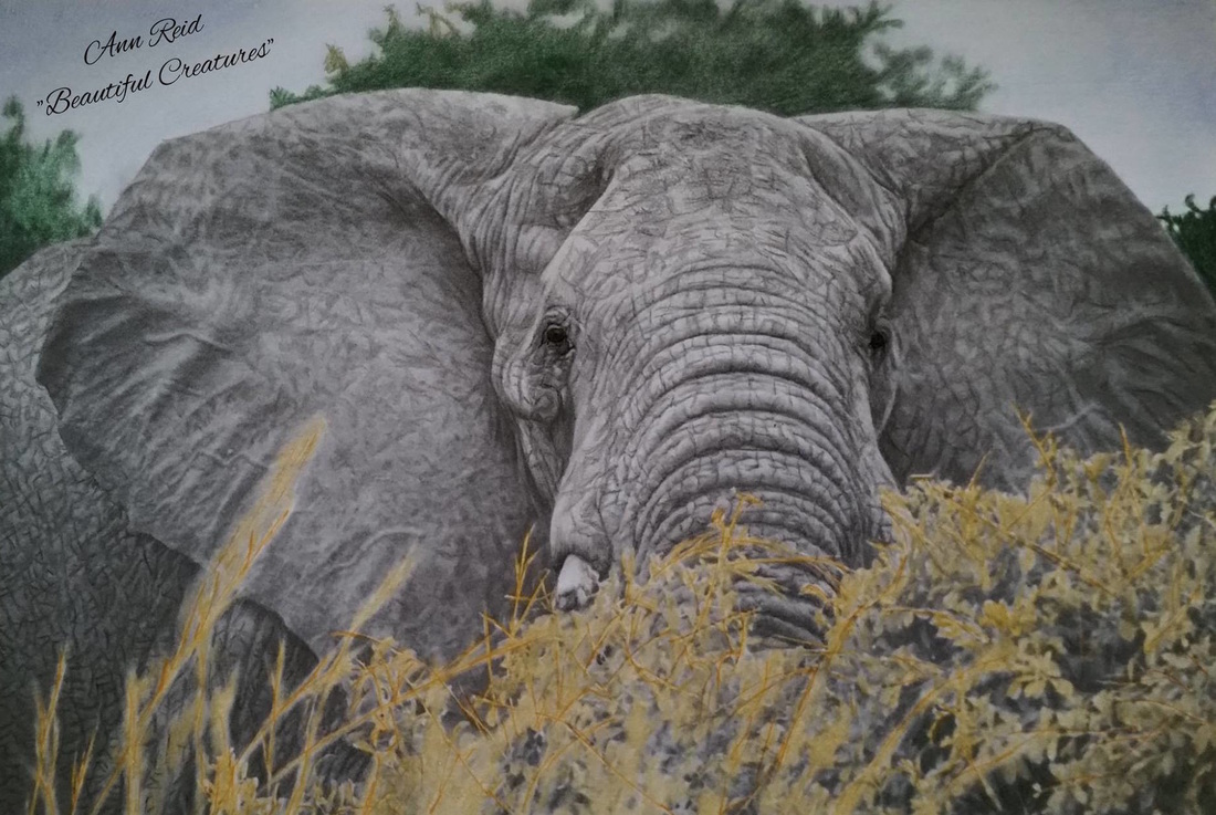 Beautiful Creatures Grayscale Adult Coloring Book: Elephant coloring ...