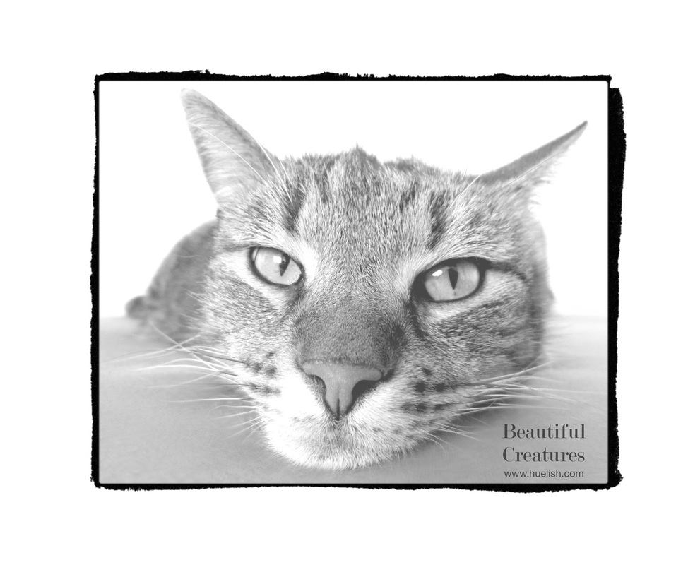 Grayscale cat from Beautiful Creatures to download and color.