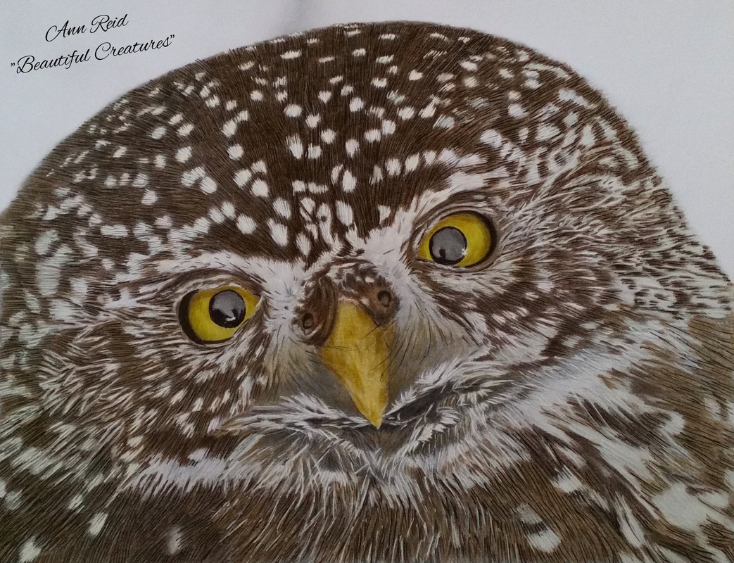 Beautiful Creatures Grayscale Adult Coloring Book: Owl coloring ...