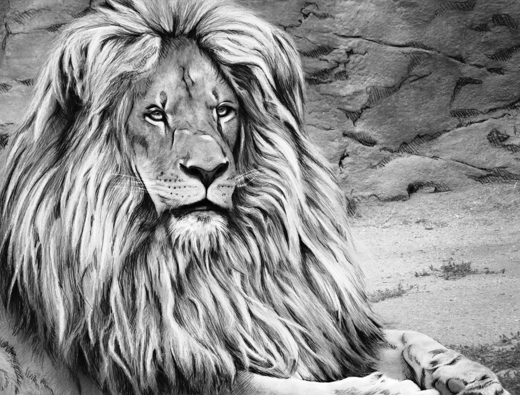 Beautiful Creatures Grayscale Adult Coloring Book Lion
