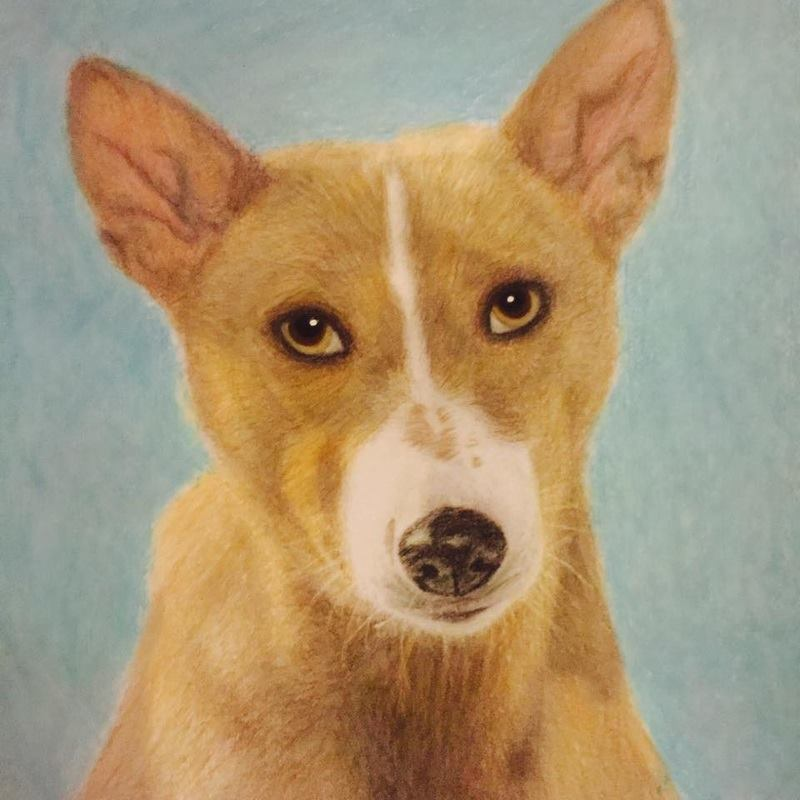 Basenji from the Beautiful Creatures grayscale coloring book. Colored by Claire Eadie of www.colourwithclaire.com