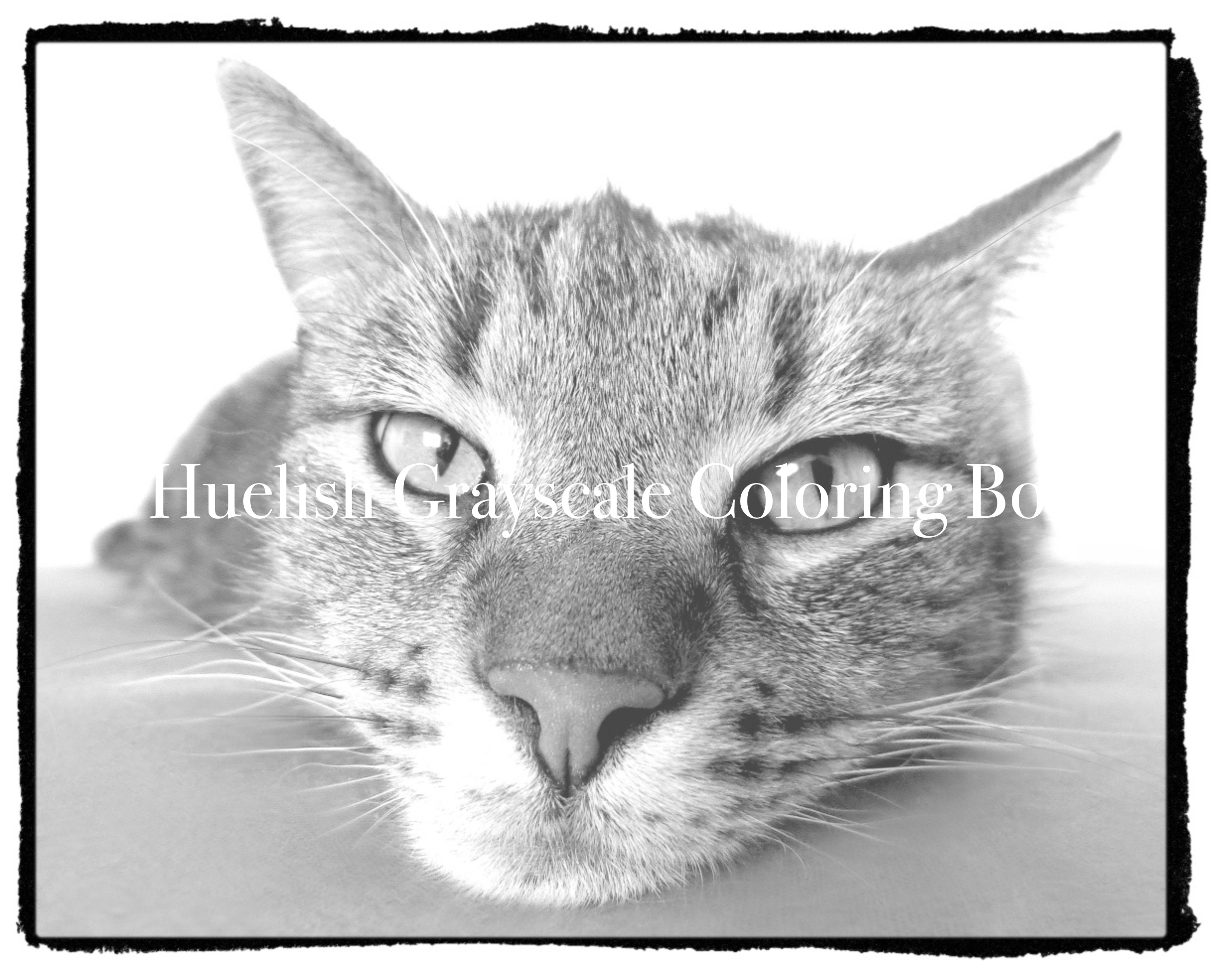 Downloadable Grayscale Coloring Page: Cat from Beautiful Creatures