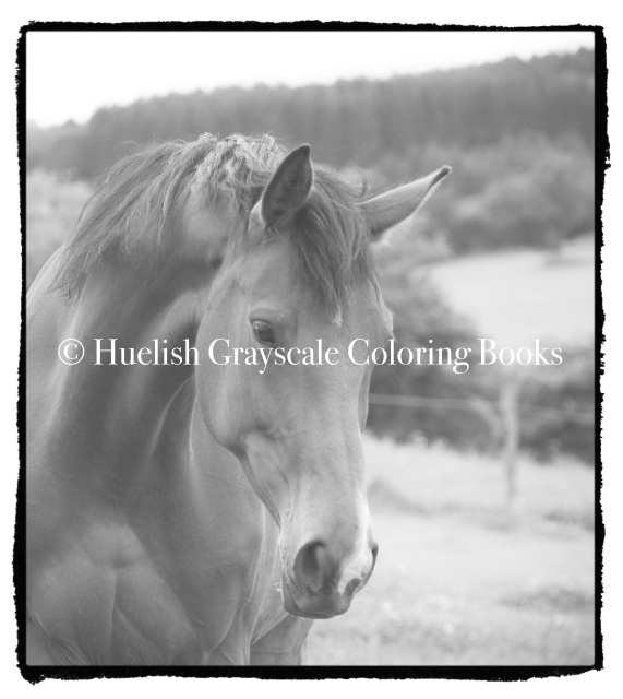 Downloadable Grayscale Coloring Page Horse