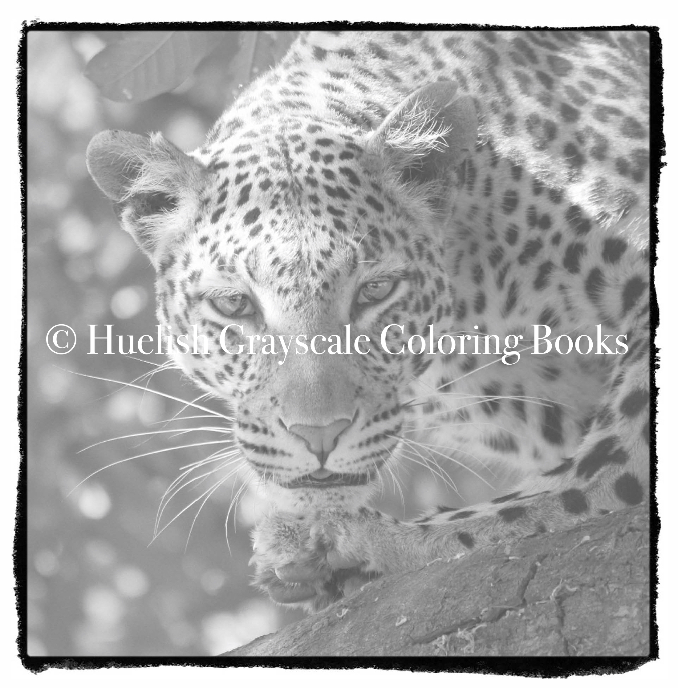downloadable grayscale coloring pack nine african animal coloring pages from beautiful creatures