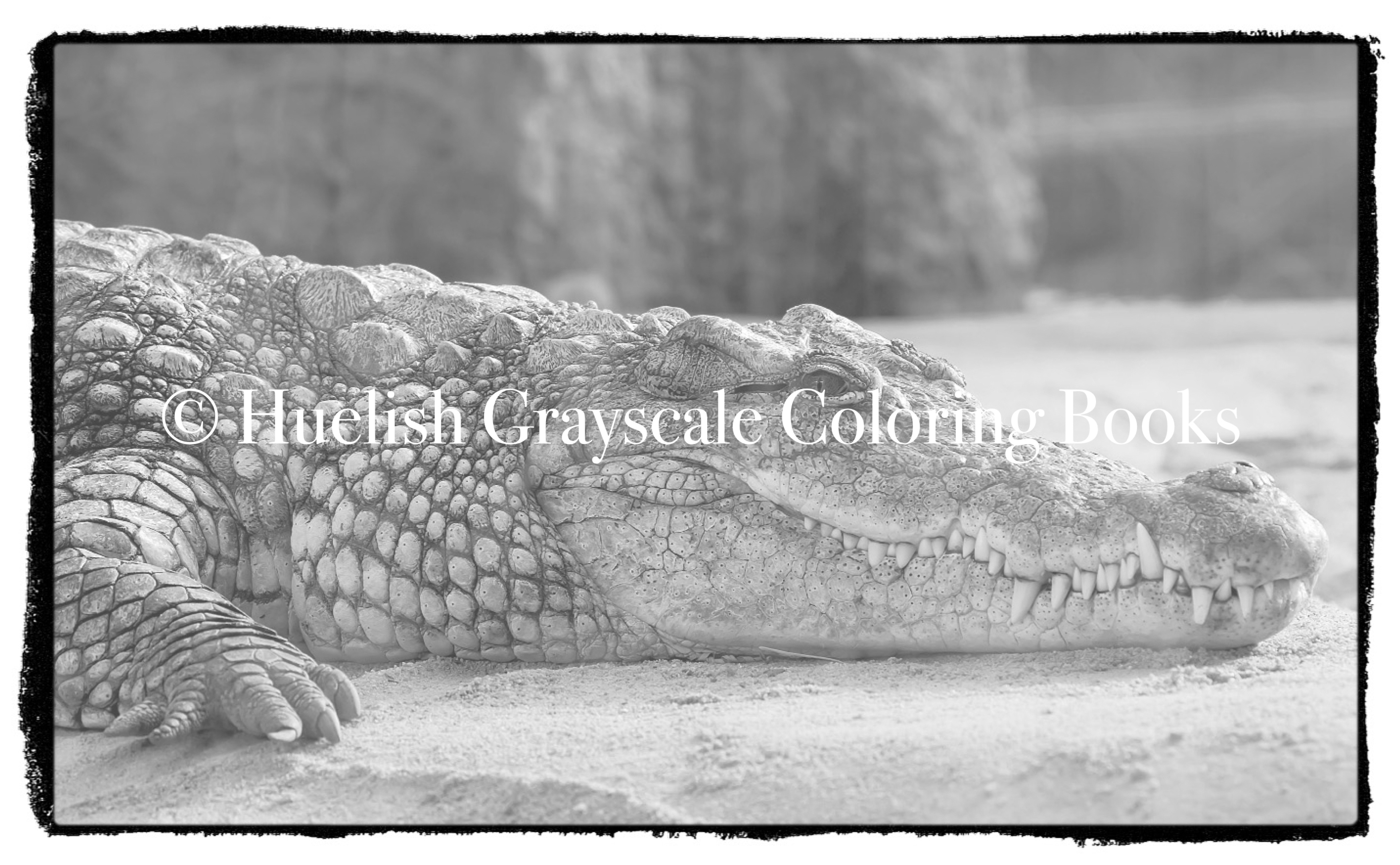 Downloadable Grayscale Coloring Pack Nine African Animal