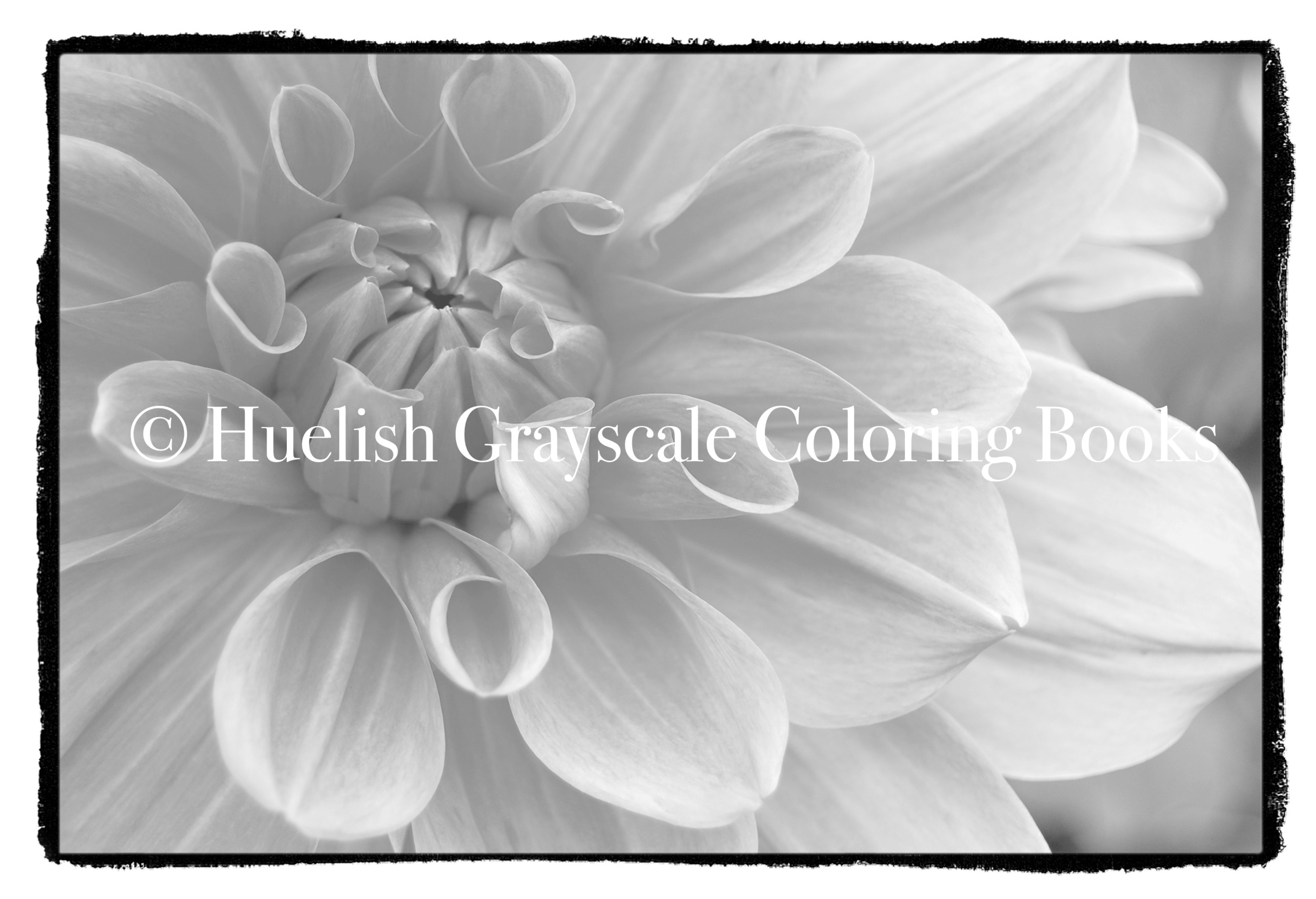 Downloadable Grayscale Coloring Page: Dahlia