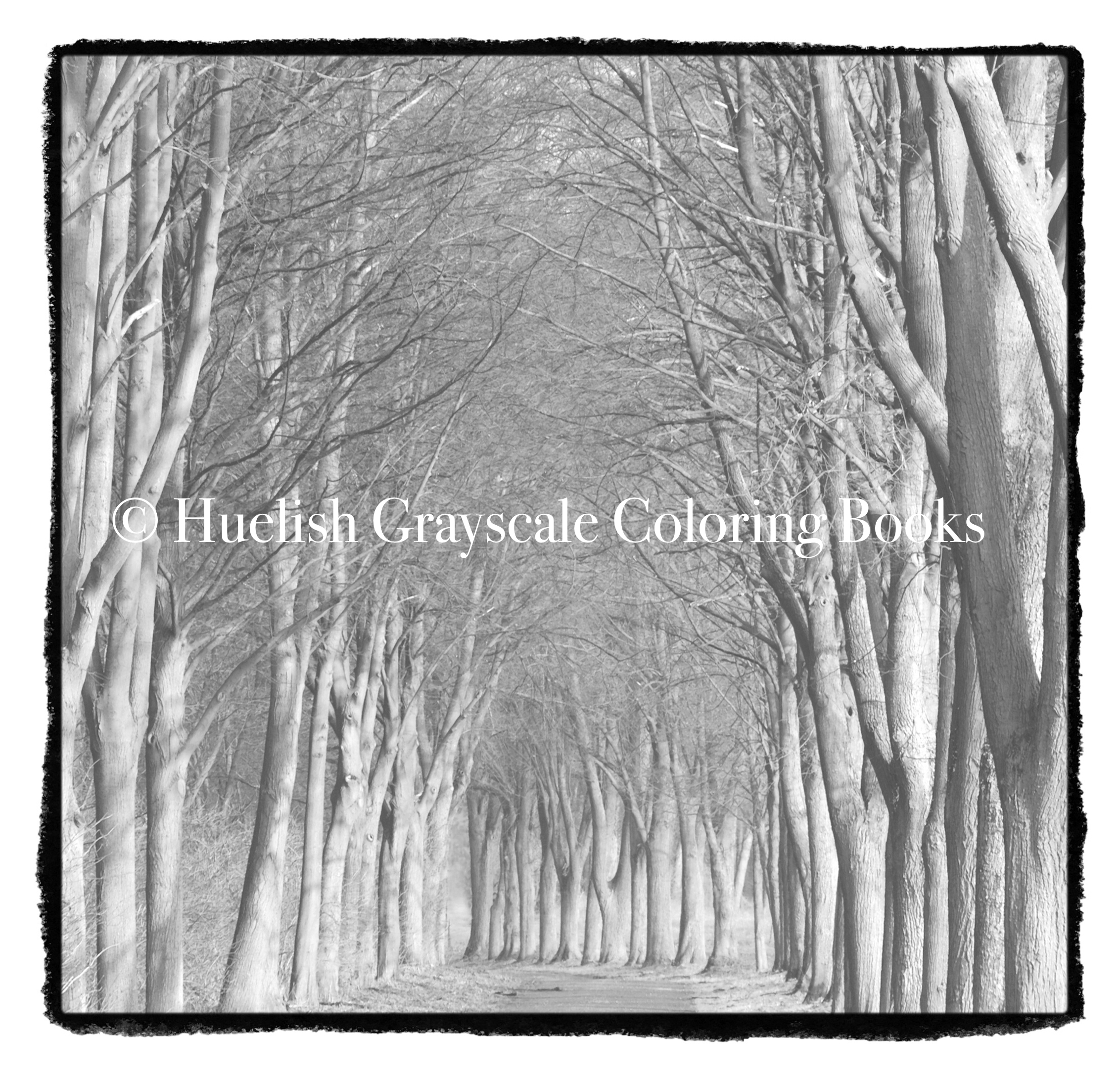 Downloadable Grayscale Coloring Page Tree Path