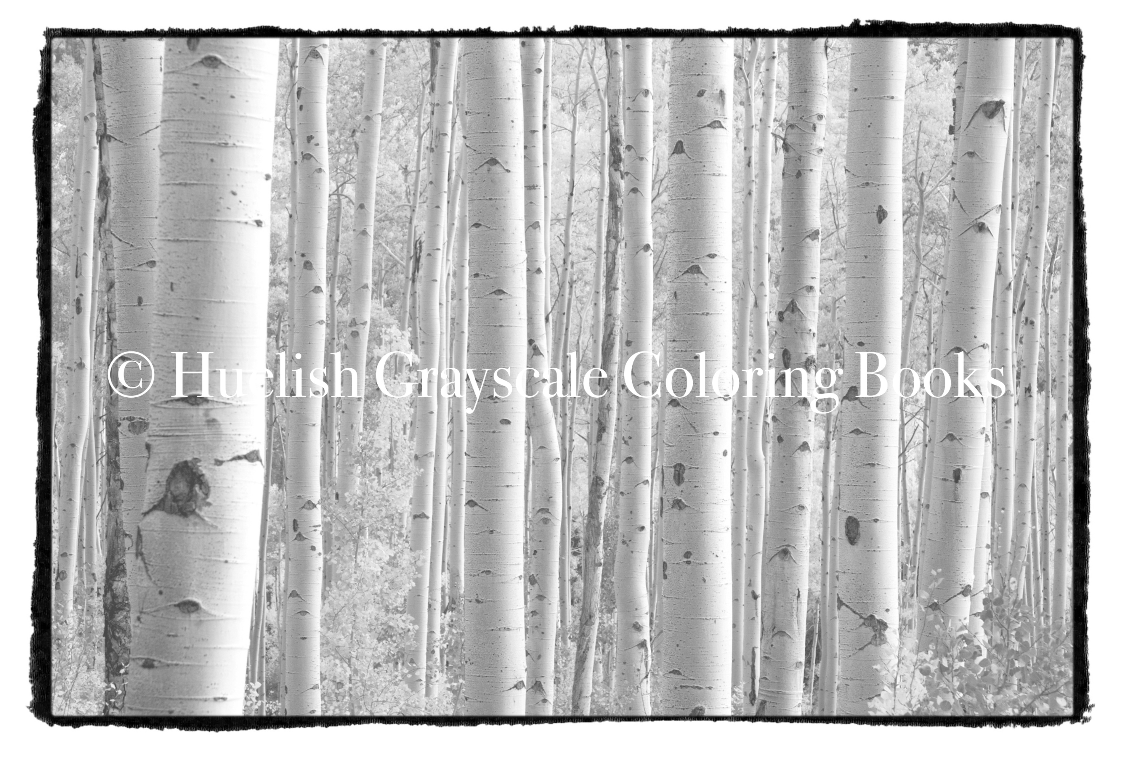 Downloadable Grayscale Coloring Page Birch Trees
