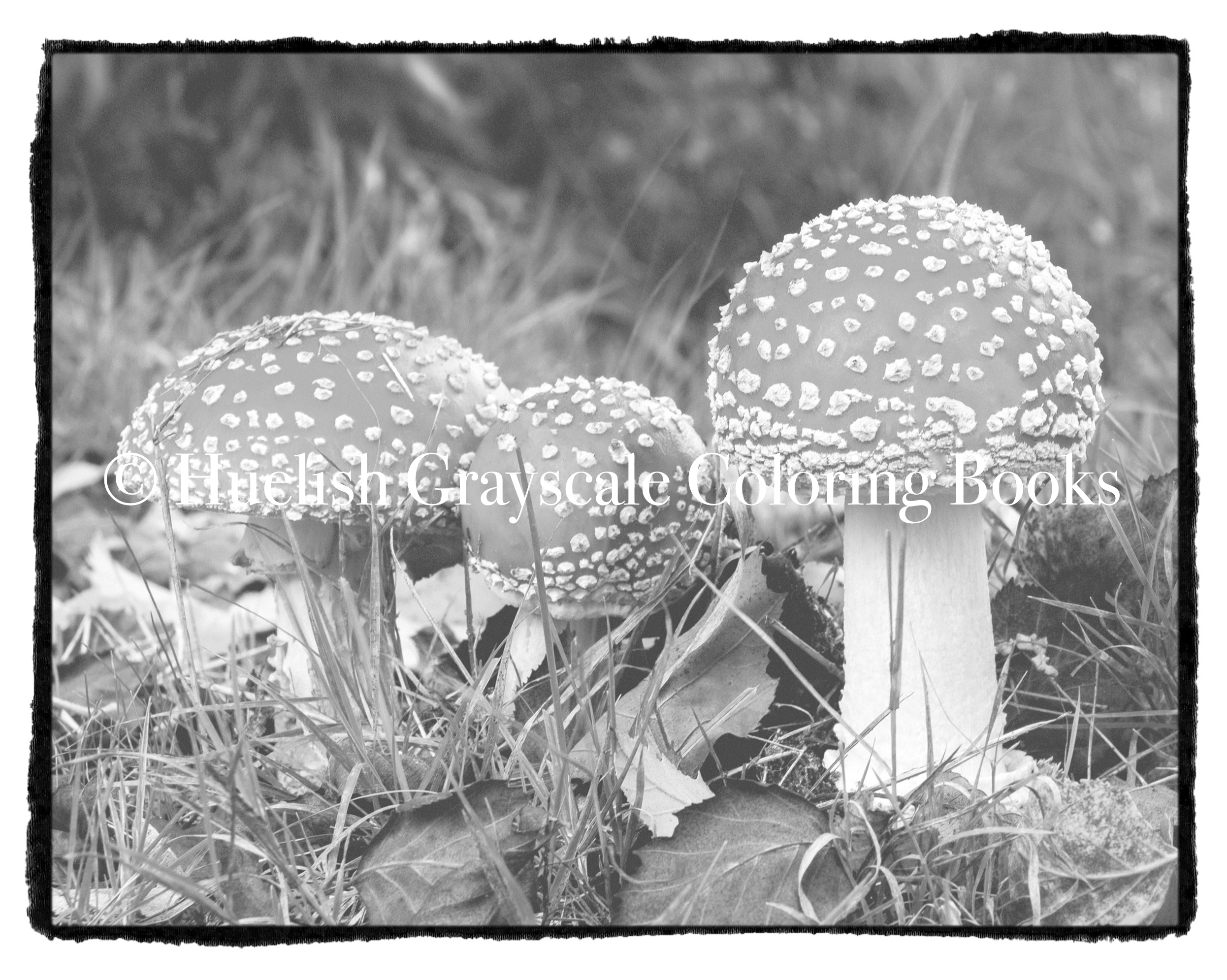 Downloadable Grayscale Coloring Page Fly Agaric Mushrooms