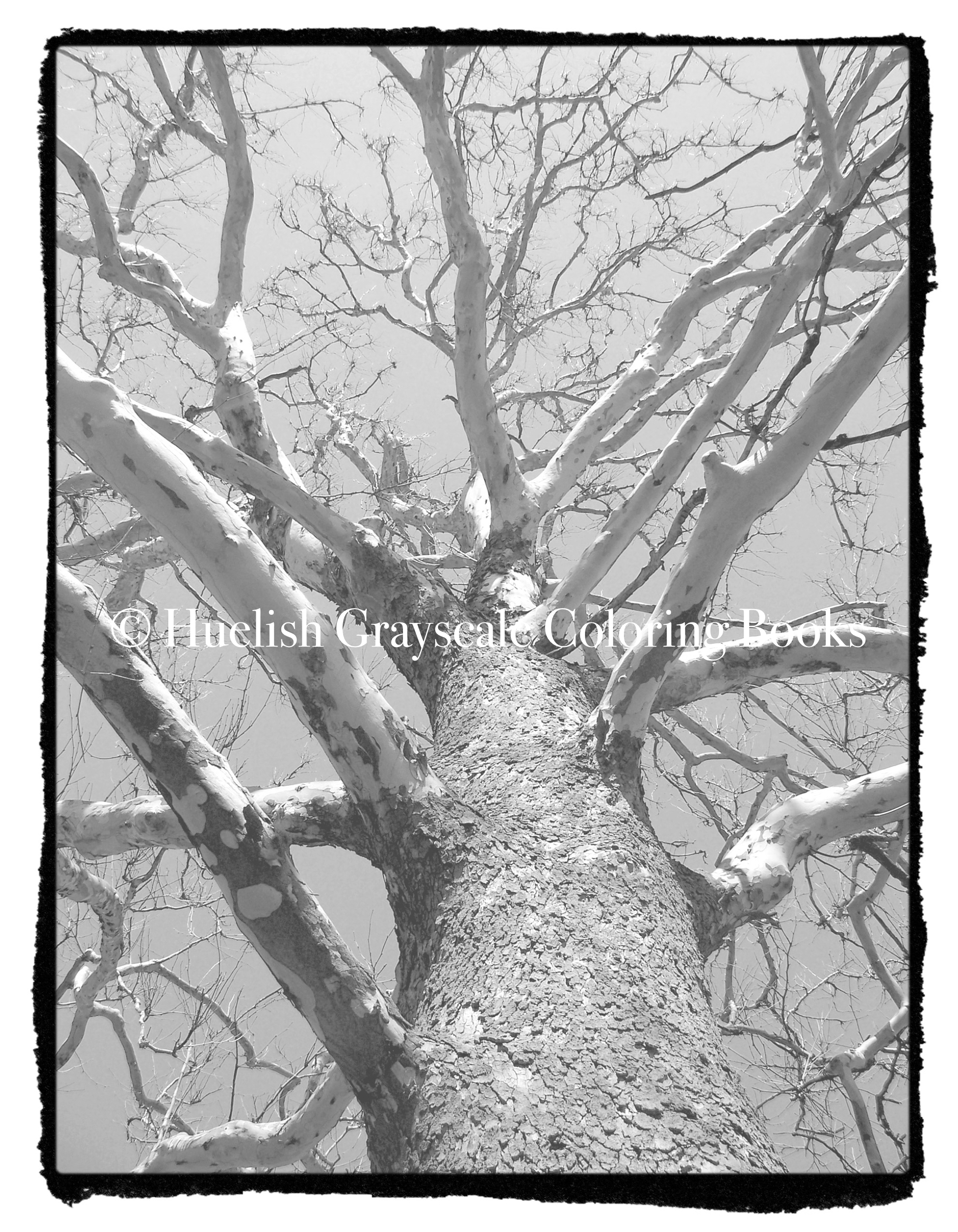 Downloadable Grayscale Coloring Page Tree